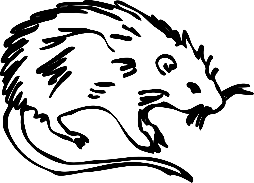 ilustrovaná myš