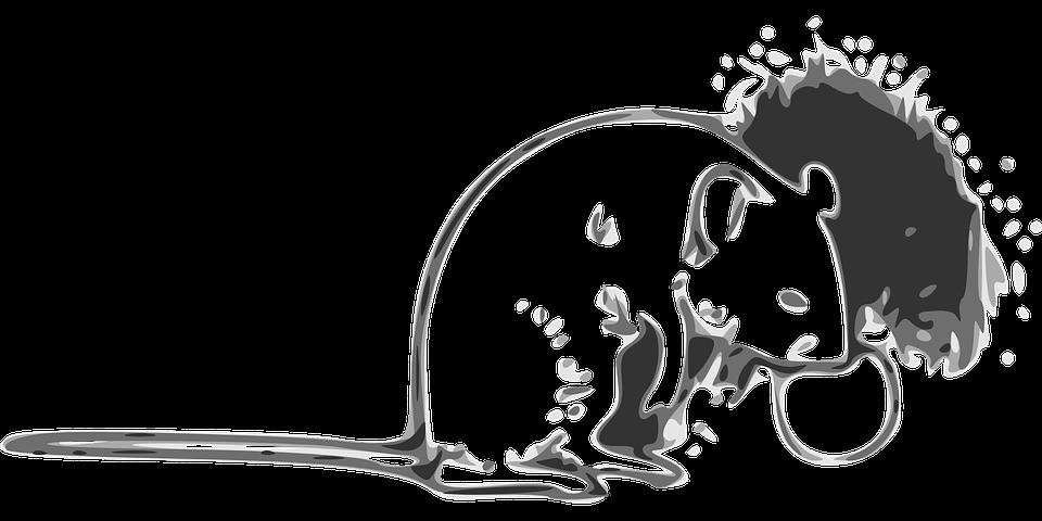 kreslená krysa